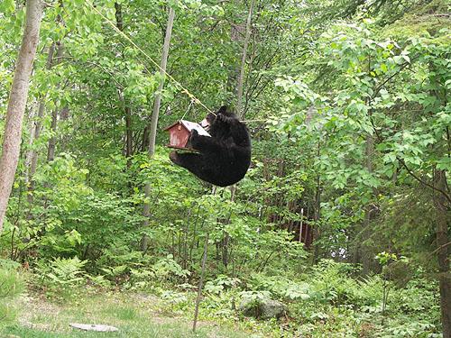 Black Bears & Tents-3.jpg