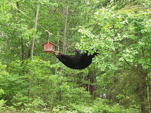 Black Bears & Tents-5.jpg