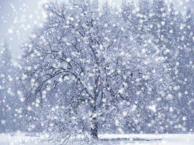 Snow Cream Recipe-snow.jpg